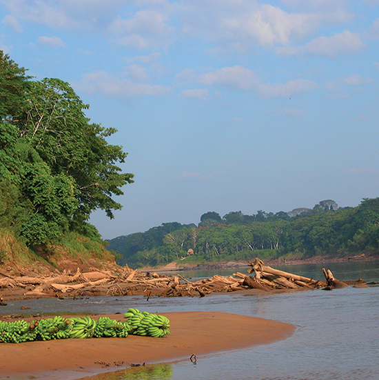 River flowing through the amazon jungle in Peru with bananas on sandbank.