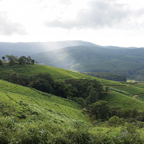 Hoedspruit landscape